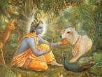 Krishna 136.jpg
