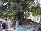 41-Banyan where Nitay rest offen.jpg
