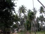 Jaganatha Vallabha garden 01.jpg