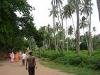Jaganatha Vallabha garden 03.jpg