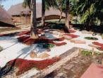 Gurukula garden 2.jpg