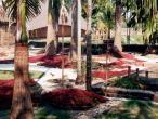 Gurukula garden 3.jpg