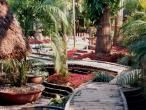 Gurukula garden 5.jpg