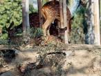 ISKCON deer.jpg