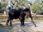 Elephant at home.jpg