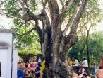 Murari Thakura tree.jpg