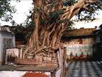 Vamsi-tree-2.jpg