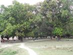 0569 Bhagavan Gola.JPG
