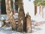 Sringara-tree-2.jpg