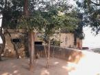 Baelvana Bael tree.jpg