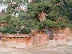 Kaliya-Ghat-approach.jpg