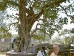 Kaliya ghat, tree 17.jpg