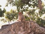 Kaliya-Ghat-tree-monkey.jpg