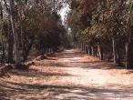 Dana Nivartana Path.JPG