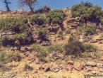 Govardhana hill 12.jpg