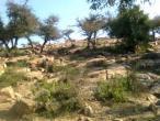 Govardhana hill 21.jpg