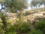 Govardhana hill 23.jpg