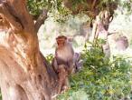 Monkeys 1b.jpg