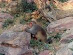 Puncari-Monkey-new-1b.jpg