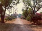 Puncari path 3.jpg