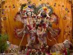Balarama jayanti ISKCON Vrindavan 15.jpg