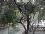 10-Tamal tree.jpg