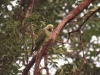 Parrot new 3.jpg