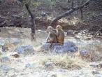 Mana path monkeys 2.jpg