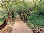 Path by Danabihari.jpg