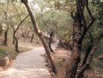 Path up 7.jpg
