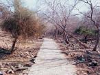 Dana Bihari path 2.jpg