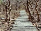 Dana Bihari path 3.jpg