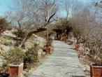 Jaipur to Sriji path end.jpg