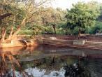 Madhumangala Kunda cow distant.jpg
