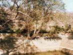 Madhumangala tree.jpg