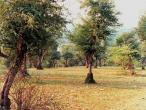 Vilas forest view 3.jpg