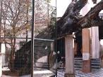 Imli tree.jpg