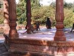 Kaliya Ghat monkeys.jpg