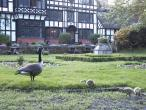 manor_duck.JPG