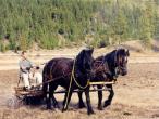 19Swami-mills-horses.jpg
